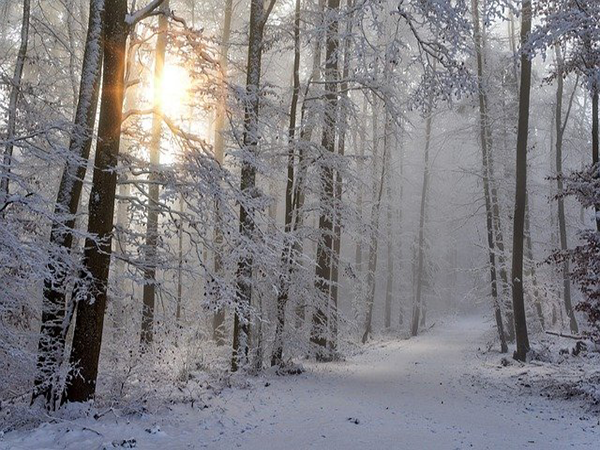 snow landscape, ambience image