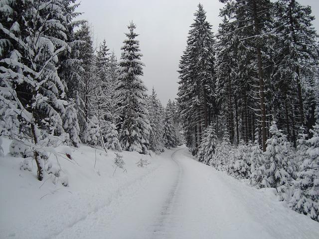 Gehweg mit Bäumen im Schnee