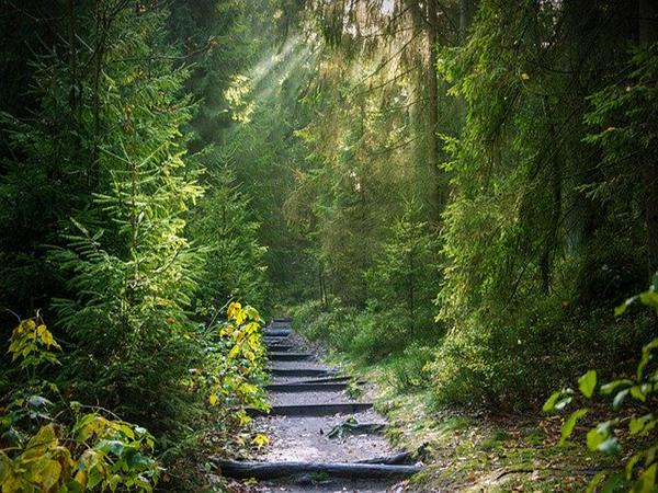 Wald, Atmosphäre Bild